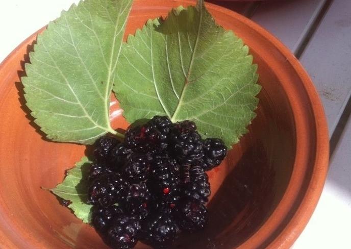Dolci frutti neri